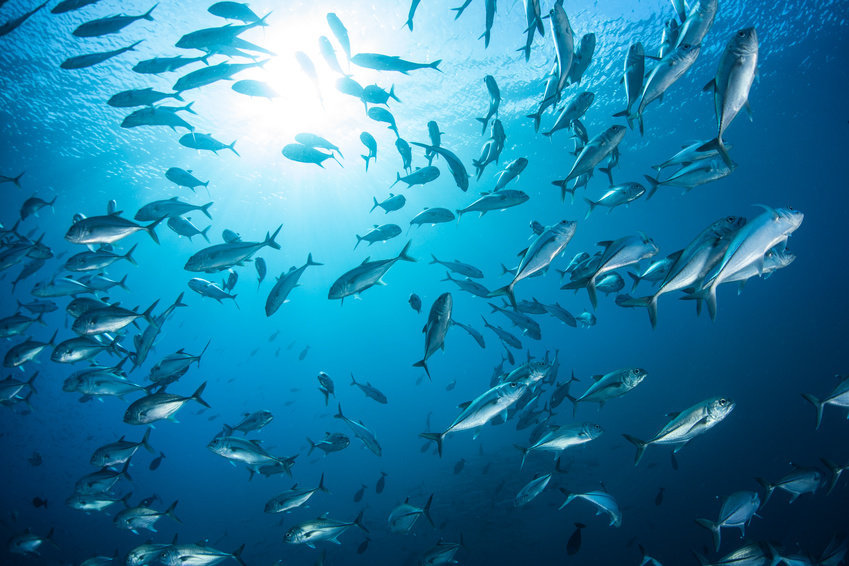 Rising carbon dioxide emissions pose 'intoxication' threat to world's ocean fish