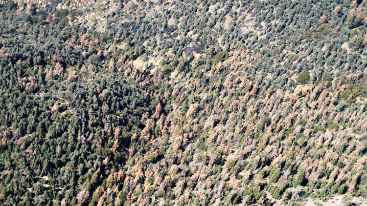 102 million dead California trees 'unprecedented in our modern history,' officials say