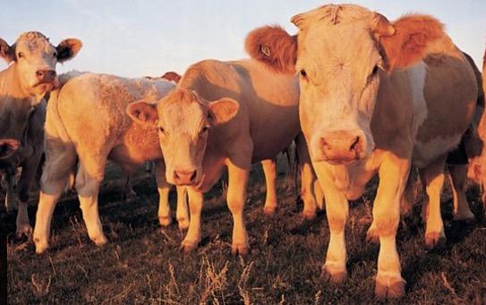 Methane surge needs 'urgent attention'