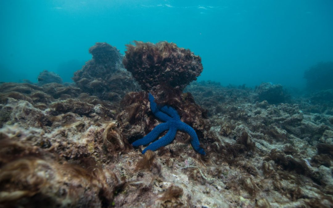 Climate Change Has 'Permanently' Changed the Great Barrier Reef