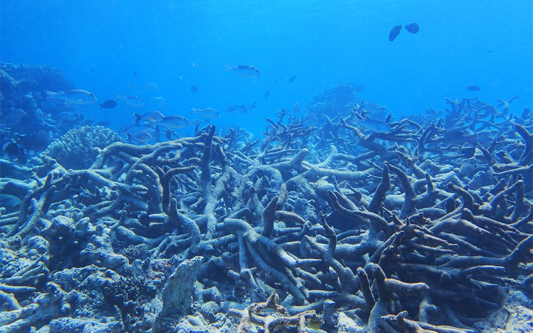 Coral reef survival hinges on 'urgent and rapid' emissions cuts