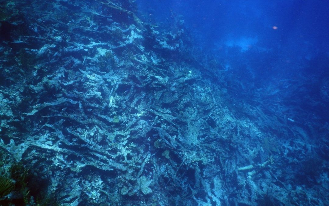 As coral reefs die, huge swaths of the seafloor are deteriorating along with them