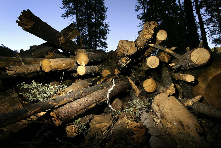 Logging Plays Bigger Climate Change Role Than U.S. Acknowledges