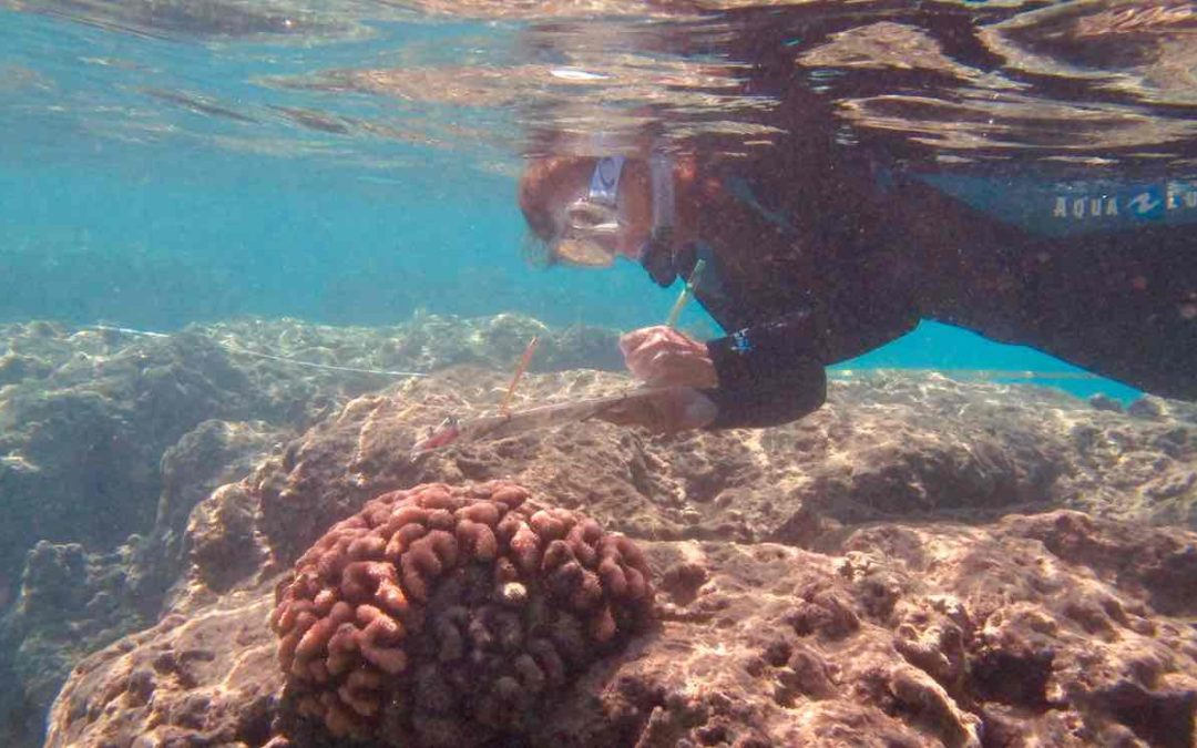 Scientists warn US coral reefs are on course to disappear within decades