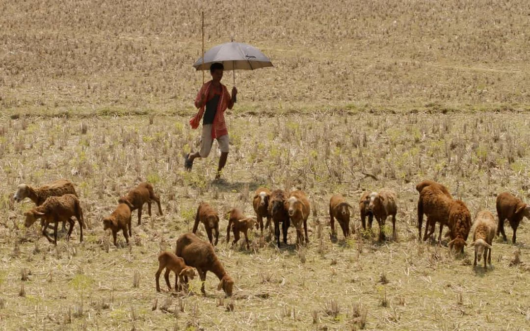 Climate change to cause humid heatwaves that will kill even healthy people