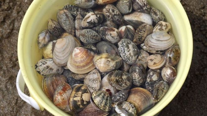 Baltic Sea clams 'giving off as much gas as 20,000 cows'