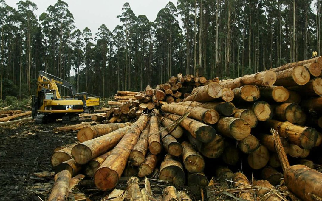 Victorian logging could trigger ecosystem collapse, researchers say