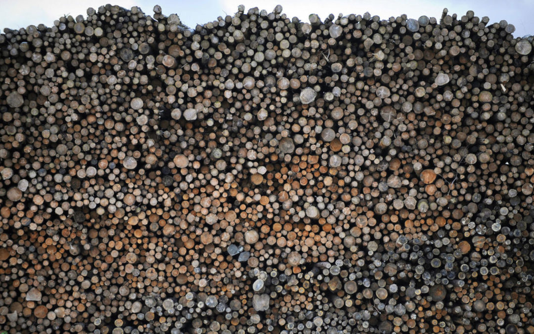 Carbon Loophole: Why Is Wood Burning Counted as Green Energy?