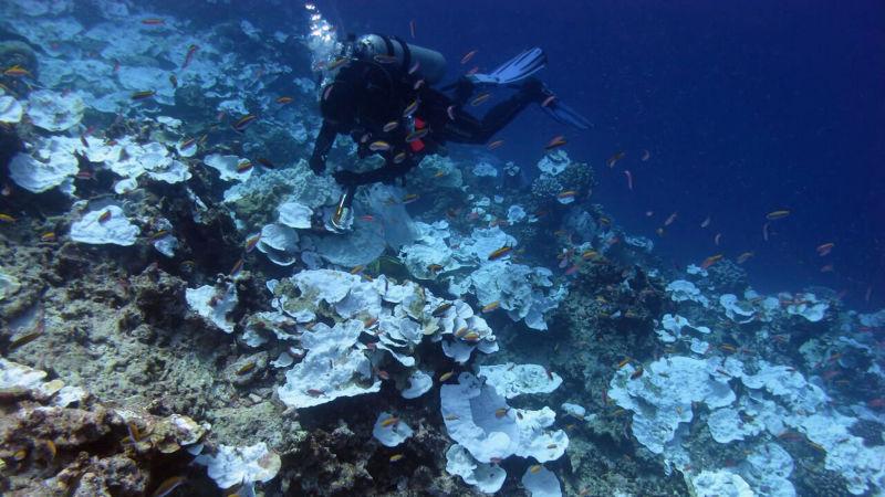 Coral Bleaching Has Ravaged Half of Hawaii's Reefs