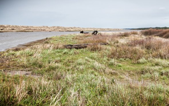West Coast Wetlands Could Nearly Disappear in 100 Years