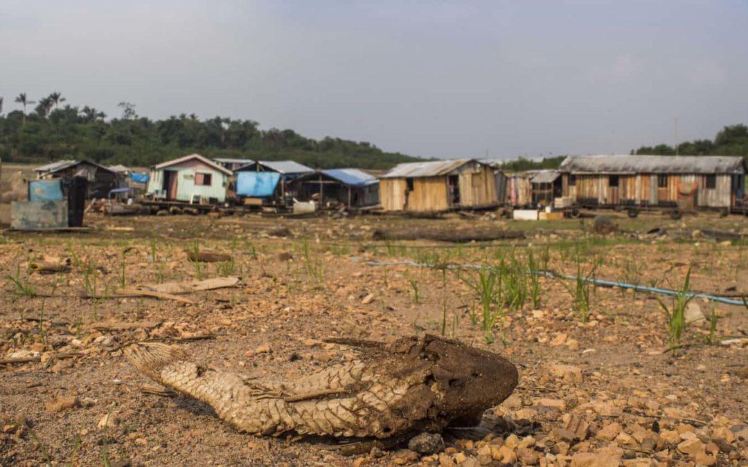 Destruction of nature as dangerous as climate change, scientists warn