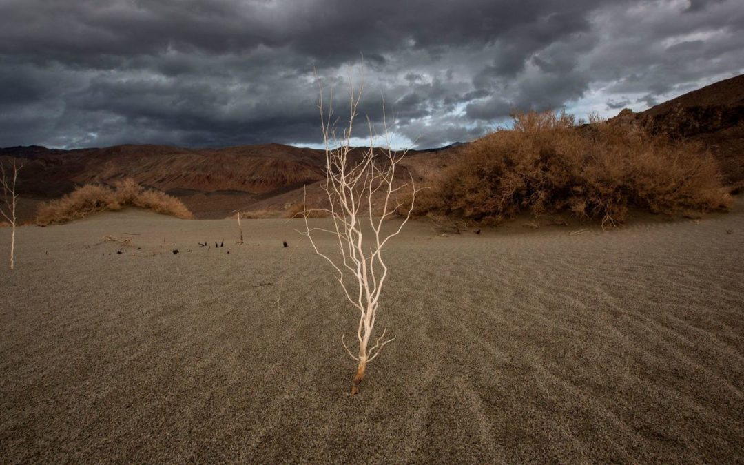 Study indicates that climate change will wreak havoc on California agriculture
