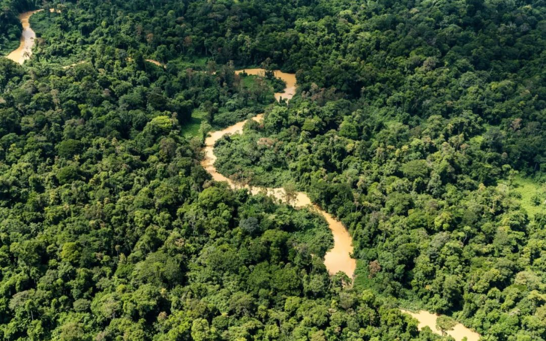 The Importance of Keeping Forests Intact