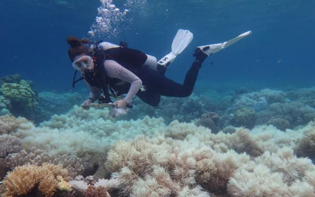 'Cooked': Study finds Great Barrier Reef transformed by mass bleaching