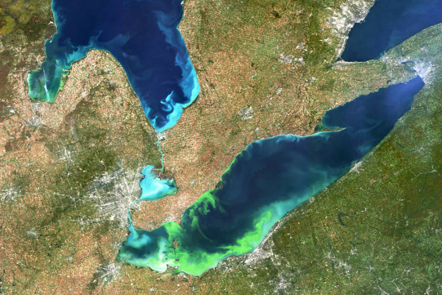 Toxic Algae Blooms Occurring More Often, May Be Caught in Climate Change Feedback Loop