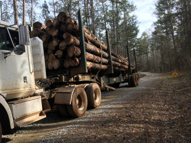 Push to Burn Wood for Fuel Threatens Climate Goals, Scientists Warn