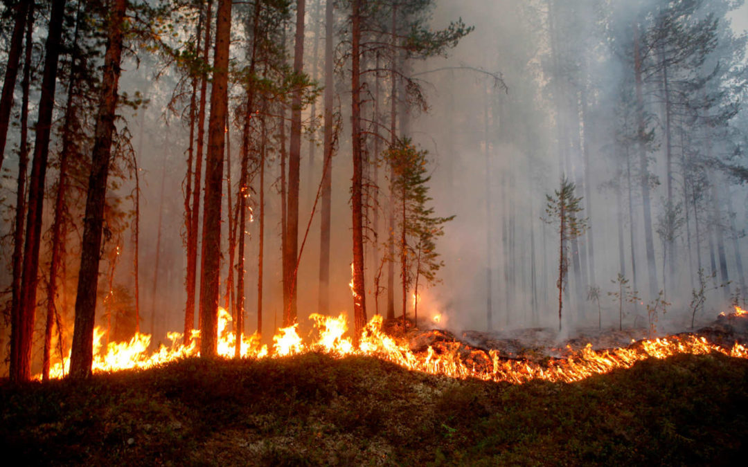 A Global Heat Wave Has Set the Arctic Circle on Fire