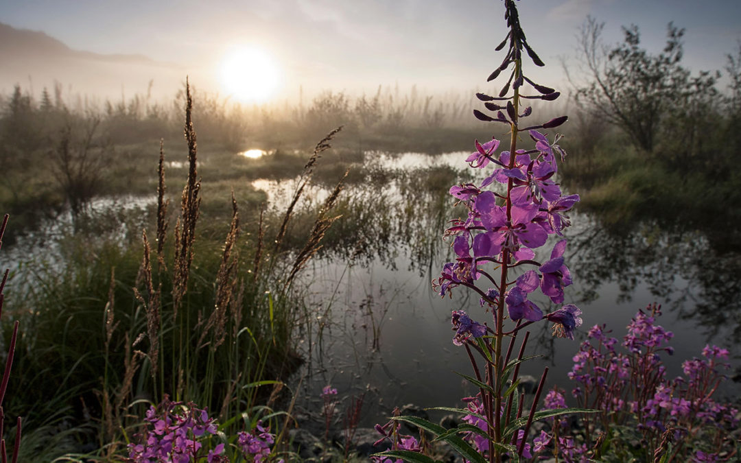 Permafrost and wetland emissions could cut 1.5C carbon budget 'by five years'