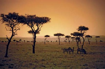 Emissions in savannas triple previous estimates