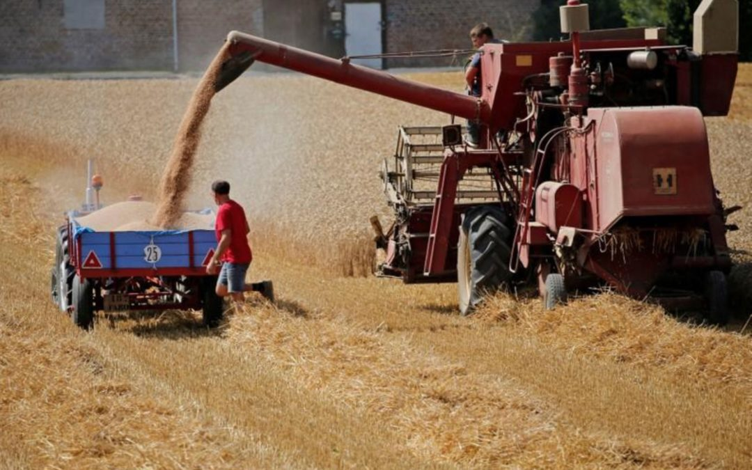 Crop damage mounts for EU farmers after torrid summer