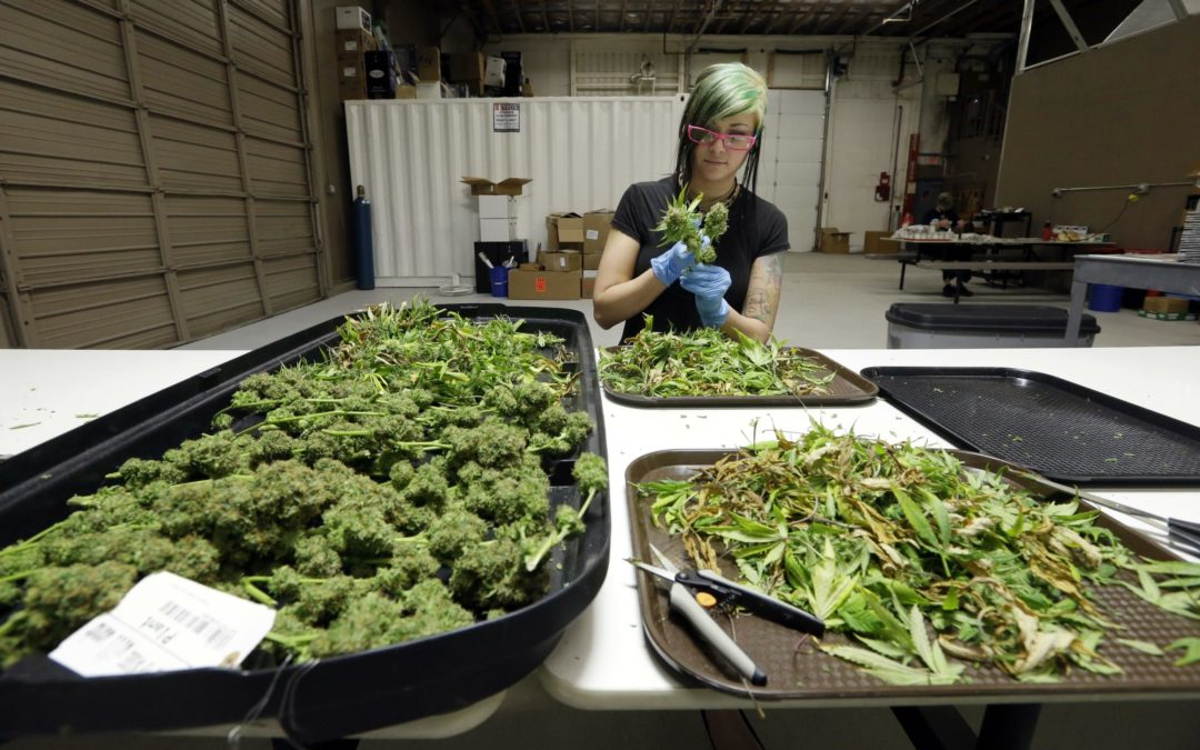 Garbage from Washington state's booming pot industry clogs gutters, sewers and landfills