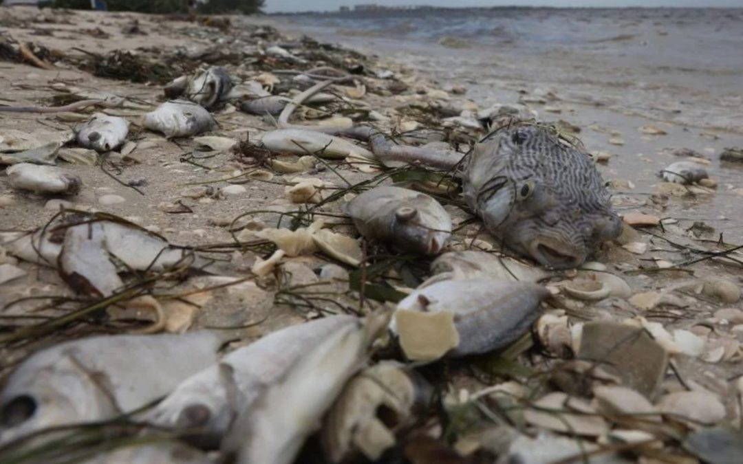 Florida declares a state of emergency as red tide kills animals and disrupts tourism