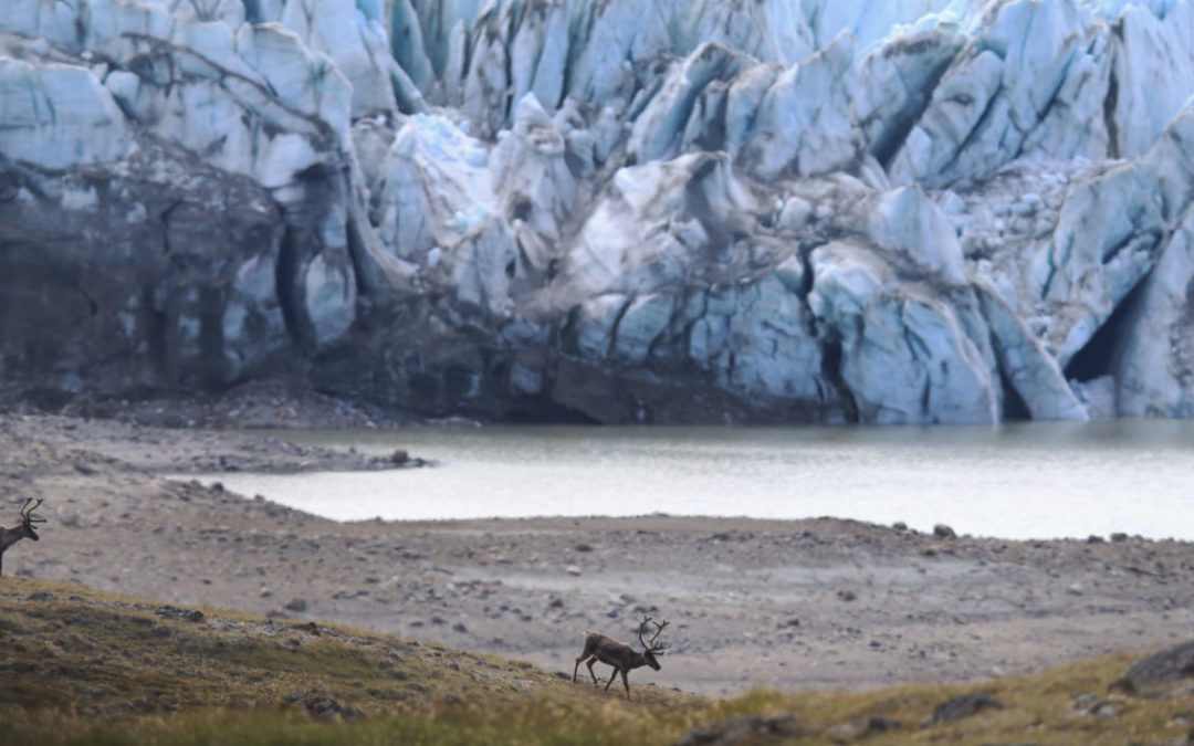 As Greenland Warms, Nature's Seasonal Clock Is Thrown Off-Kilter