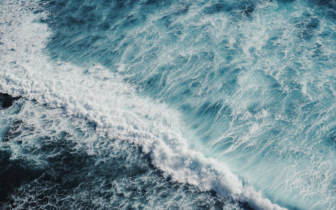 Scientists Urge Immediate, Decisive Action to Tackle Deoxygenation in Oceans