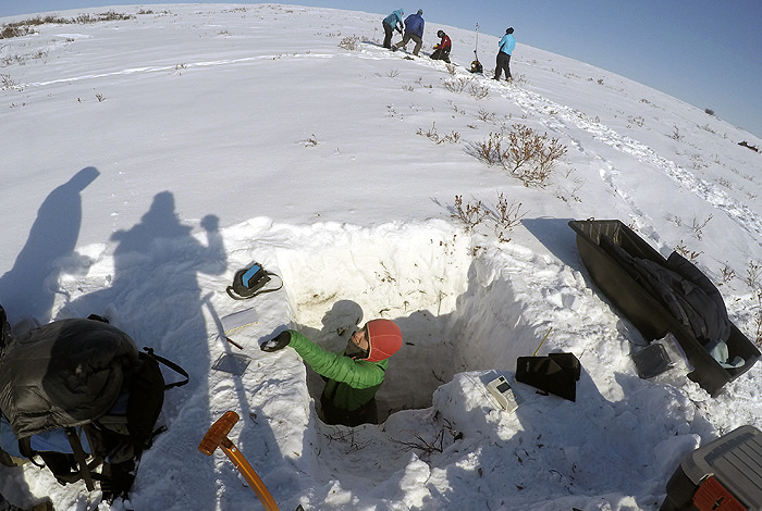 Arctic greening thaws permafrost, boosts runoff