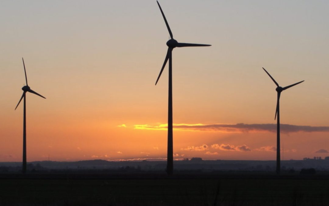 Bat threats difficult to anticipate on wind farms