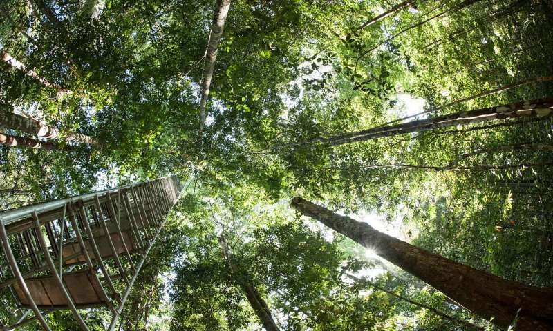 High CO2 levels cause plants to thicken their leaves, could worsen climate change effects