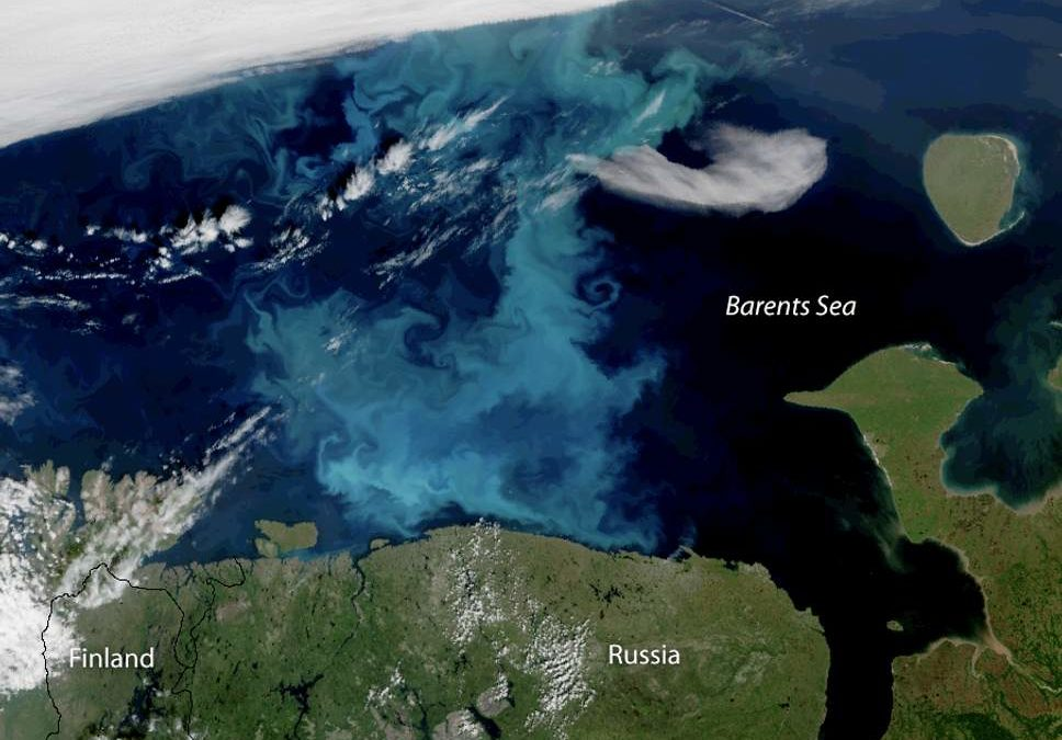 Plankton moving into Arctic waters previously covered with ice could have 'drastic consequences'