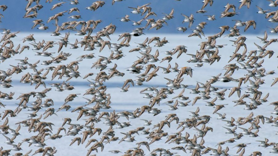 Climate Change: Arctic 'no safe harbour' for breeding birds
