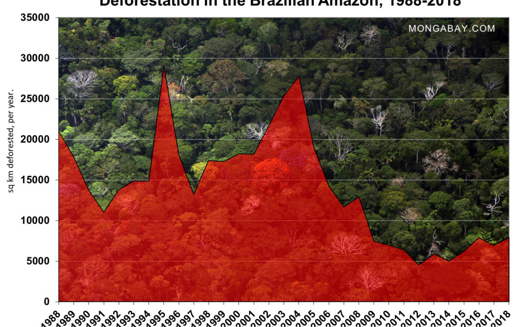 Amazon deforestation at highest level in 10 years, says Brazil