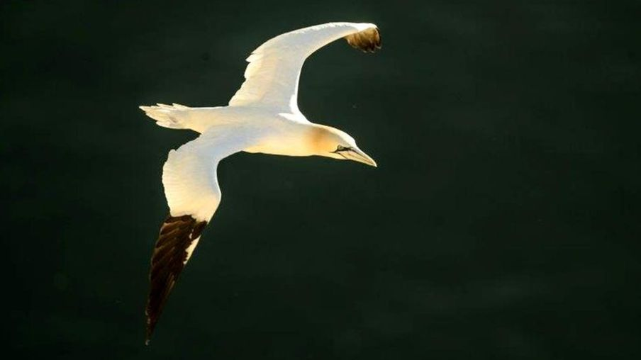Seabird numbers 'at risk due to fishing' according to Aberdeen study