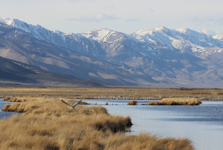 Trump Administration to Auction Off 900,000 Acres for Fracking in Nevada
