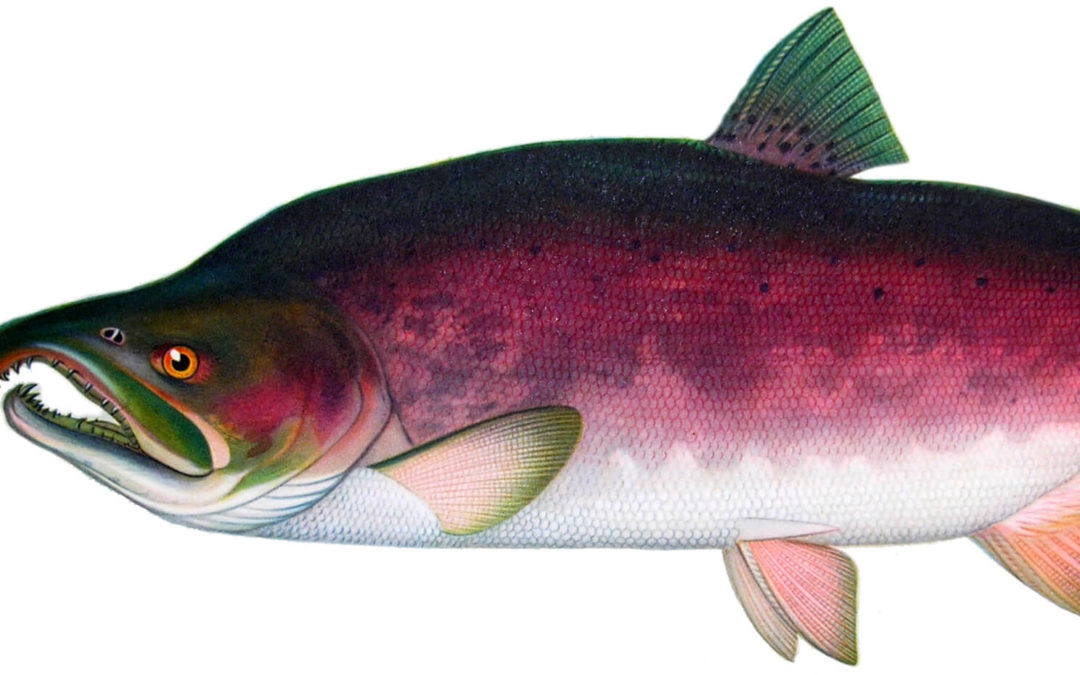DDT in Alaska meltwater poses cancer risk for people who eat lots of fish