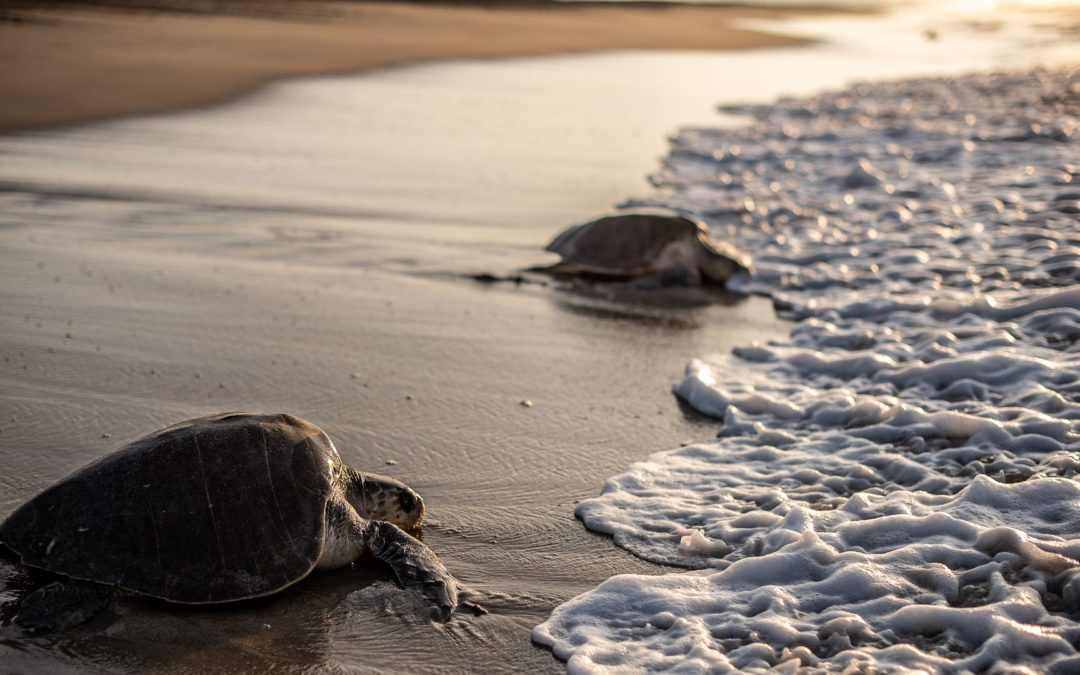 Researchers find plastic particles in every sea turtle tested for study