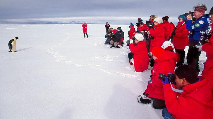 Tourists may be making Antarctica's penguins sick