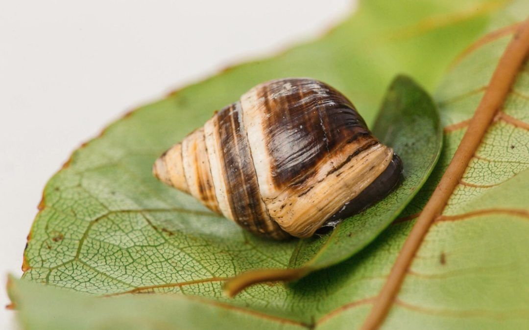 Lonely George the tree snail dies, and a species goes extinct
