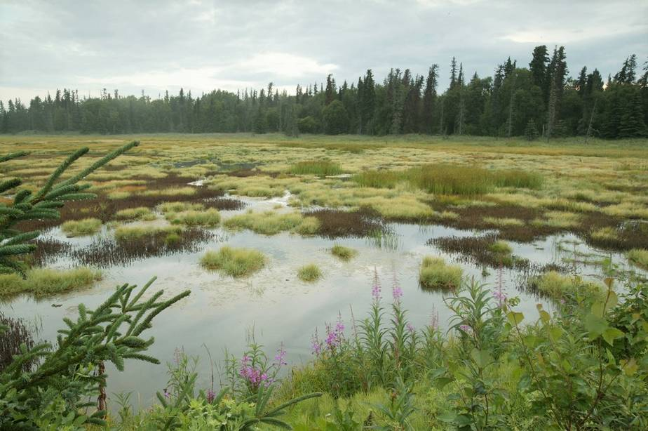Arctic Bogs Hold Another Global Warming Risk That Could Spiral Out of Control
