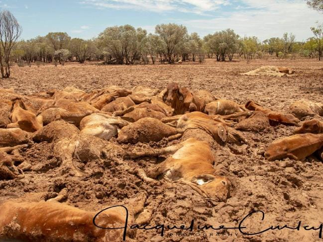 Flood-affected farmers witness entire cattle herds wiped out by catastrophic deluge