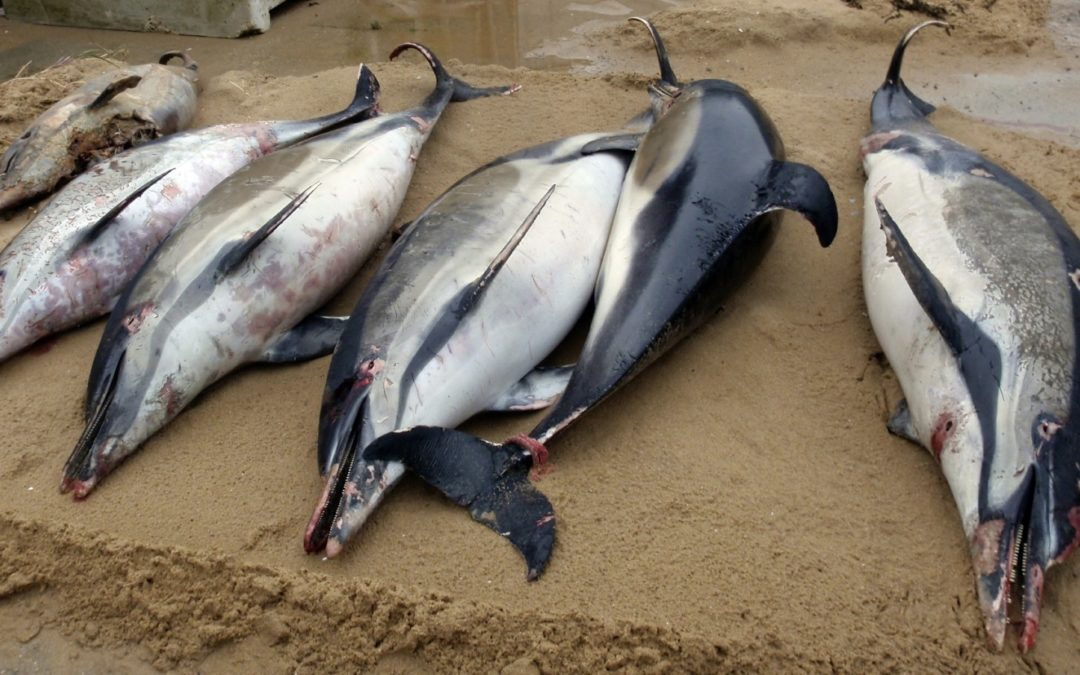 Action demanded after 1,100 dead dolphins wash up in France