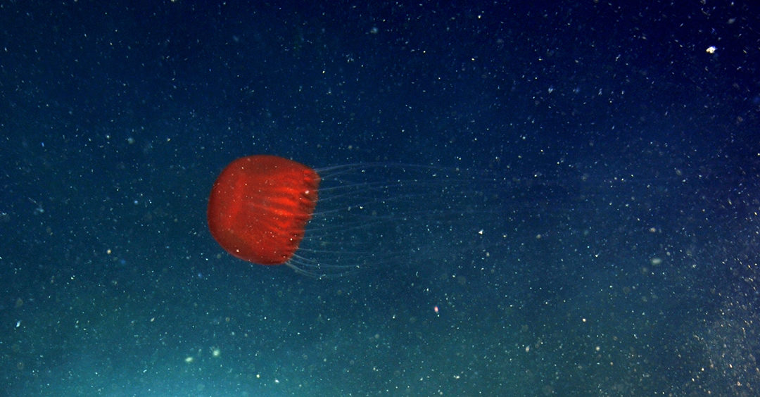 It's only a matter of time before deep-sea mining comes to Canada. We're not ready.