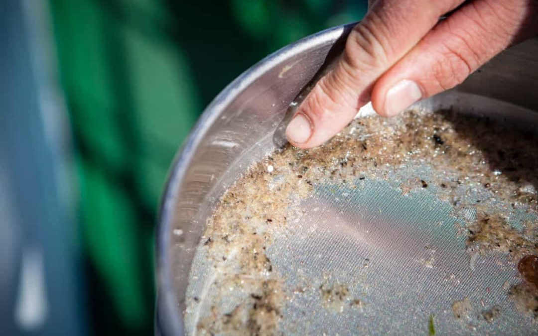 Microplastic pollution revealed 'absolutely everywhere' by new research