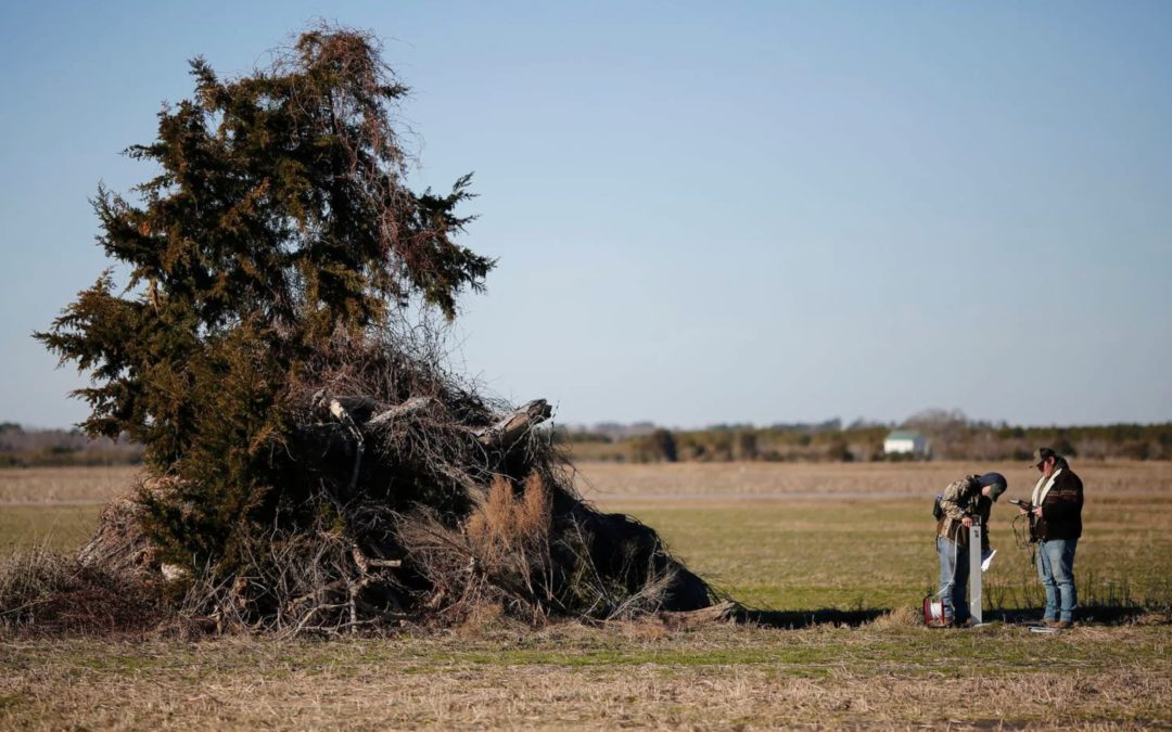 Ruined crops, salty soil: How rising seas are poisoning North Carolina's farmland