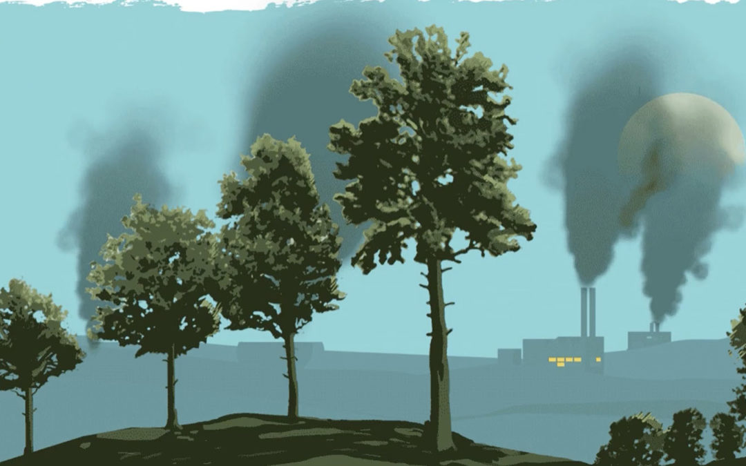 Europe's renewable energy policy is built on burning American trees