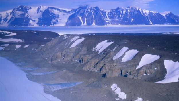 Climate change: Warning from 'Antarctica's last forests'