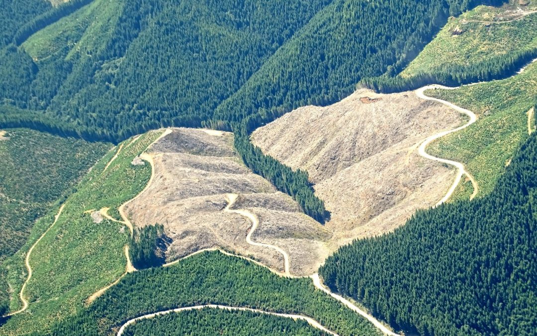 Logging Is the Lead Driver of Carbon Emissions from US Forests