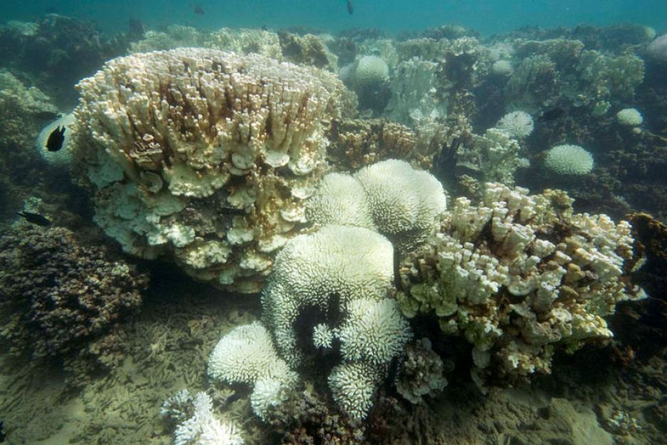 Lord Howe Island coral bleaching 'most severe we've ever seen', scientists say